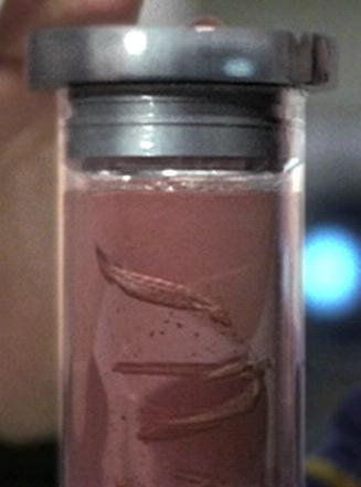 immunocytic gel worm alien species wiki aliens ufos